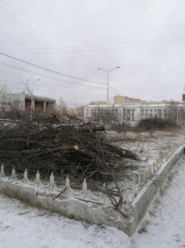 """""""Мэрия Якутска не выдавала разрешения на вырубку деревьев"""""""
