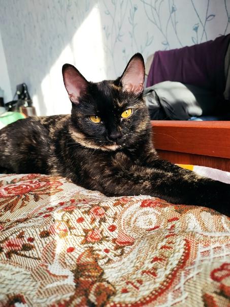 В районе Южного, д.19 пропала кошка по кличке Черн...