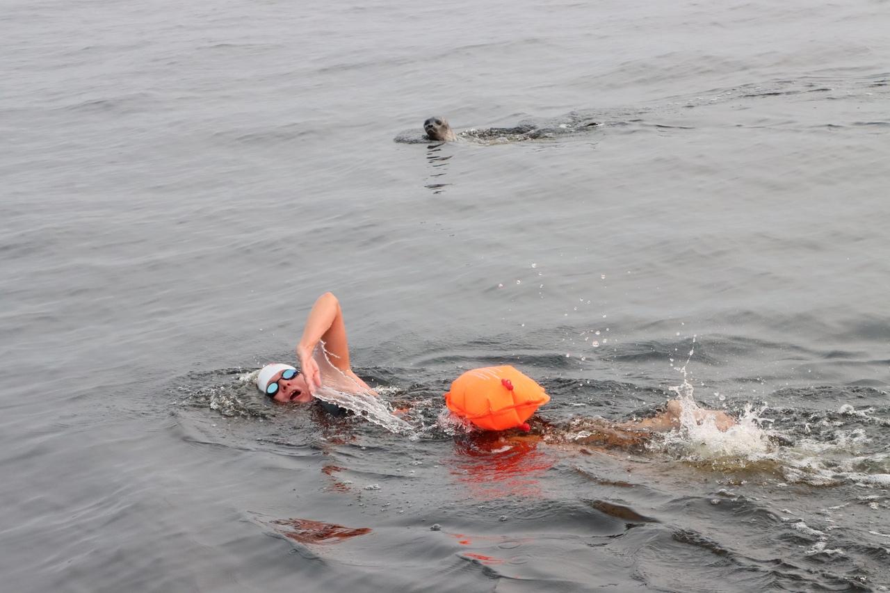 Первый Арктический заплыв через пролив Вега в Карском море