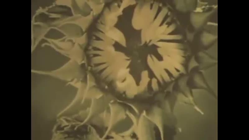 Война На западном направлении 1990 6 серия Рождение гвардии Золотая колл