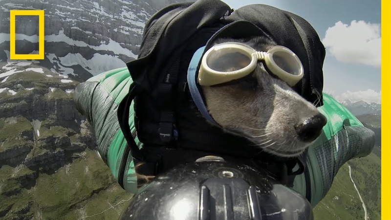 Dean Potter BASE Jumps With His Dog National Geographic