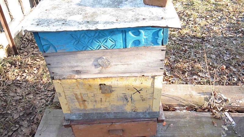 Как исправить ошибки пчеловода в начале зимовки Где живет Мишка