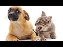 🐈 Кошки против собак 🐕 Подборка приколов с котами для хорошего настроения! 😸
