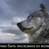 Фотография Сергея Маркова