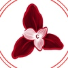 Мой блокнот. Орхидеи.