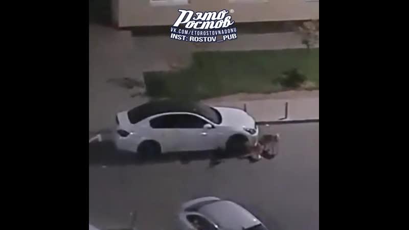 Собаки в Батайске погрызли автомобили пытаясь достать кошек