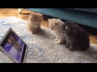 Котята смотрят мультики