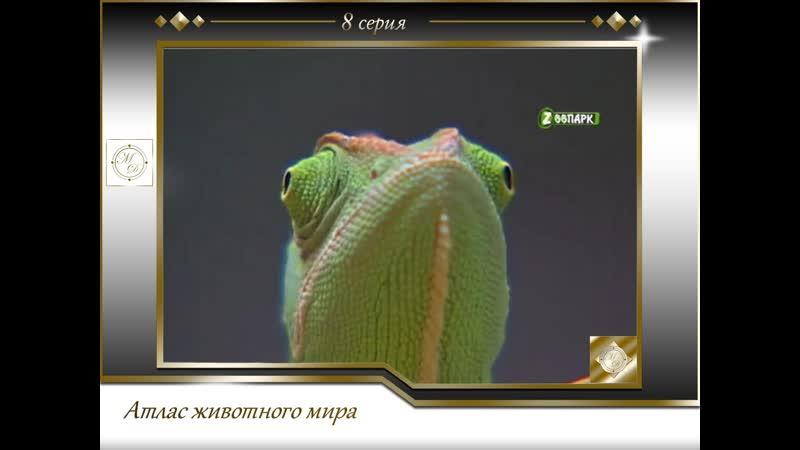 Атлас животного мира 8 серия Рептилии