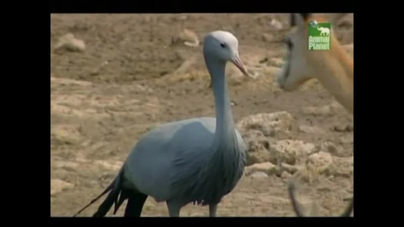 Заповедник в дебрях Африки Animal Park Wild in Africa 2006 BBC episode 08